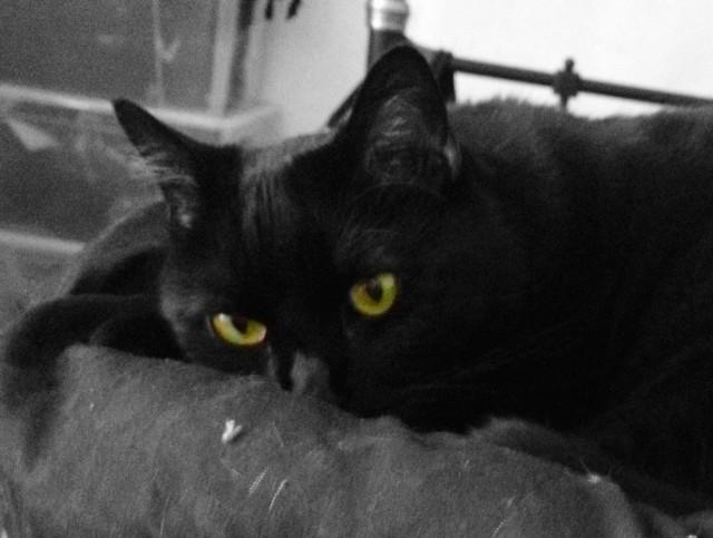 Kira Eyes